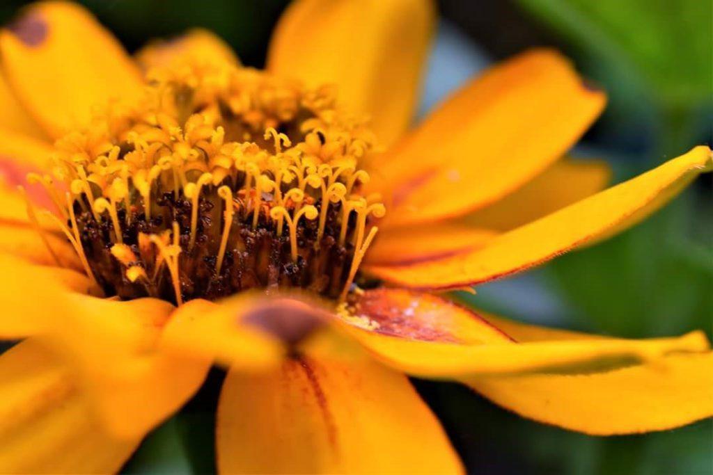Organik Photos Flower